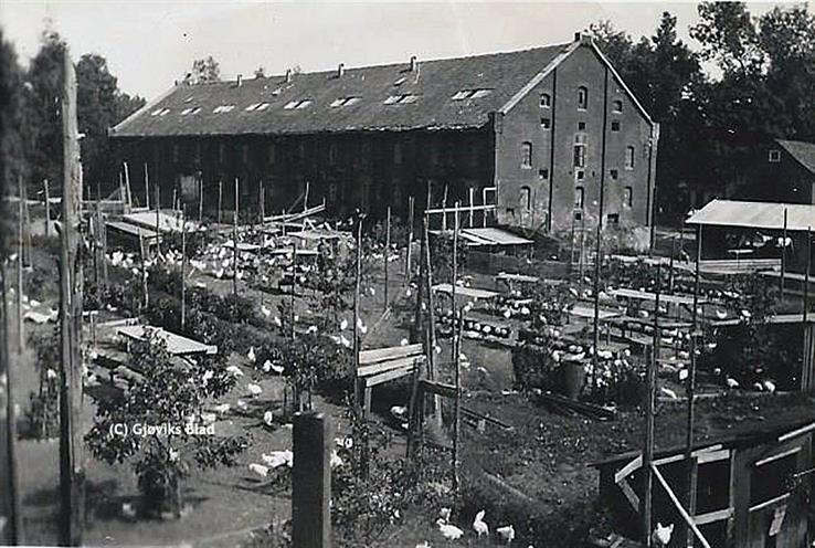 Hønsehuset var enormt og huset omlag 3.000 høner som hadde flere gangbruer ut fra huset på baksiden, der parkeringsplassen er i dag. Bildet er tatt før krigen en gang. Bygningen ble senere skallet på det som er Gjøvikhallen i dag.